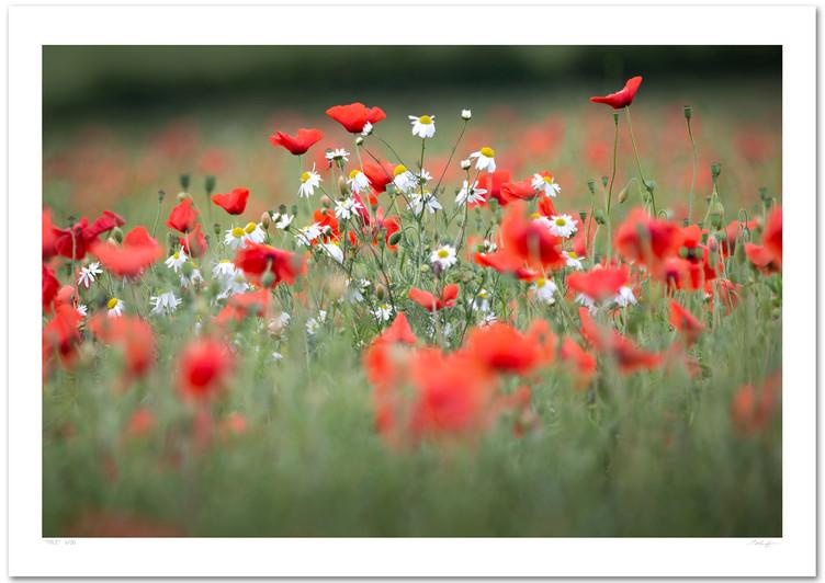 _66A3623 (Poppy Field Bouquet).jpg