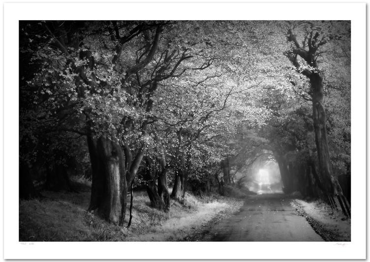 _DSC3236v3 (mono - A Road Less Travelled