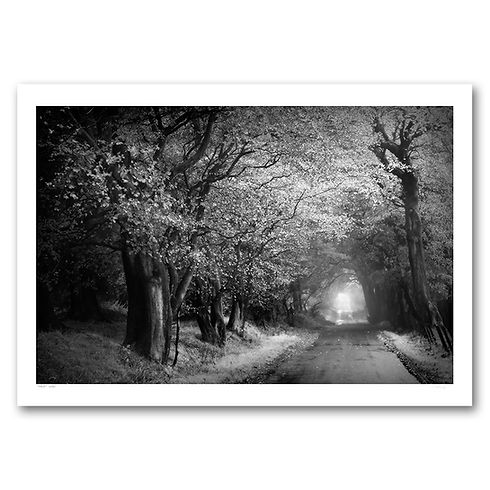 A Road Less Travelled - dreamy trees looking