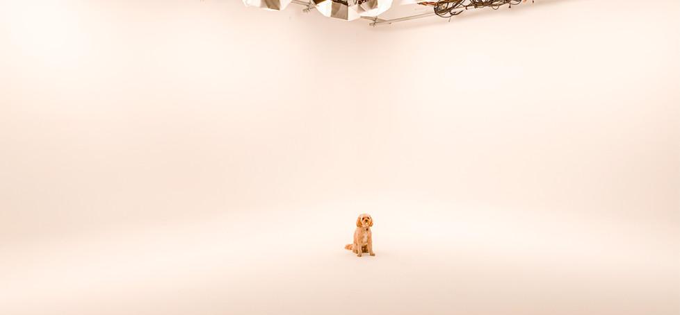 Doggie 2.JPG