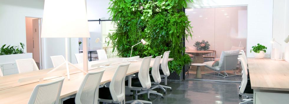 Weorkspace plant wall.jpg