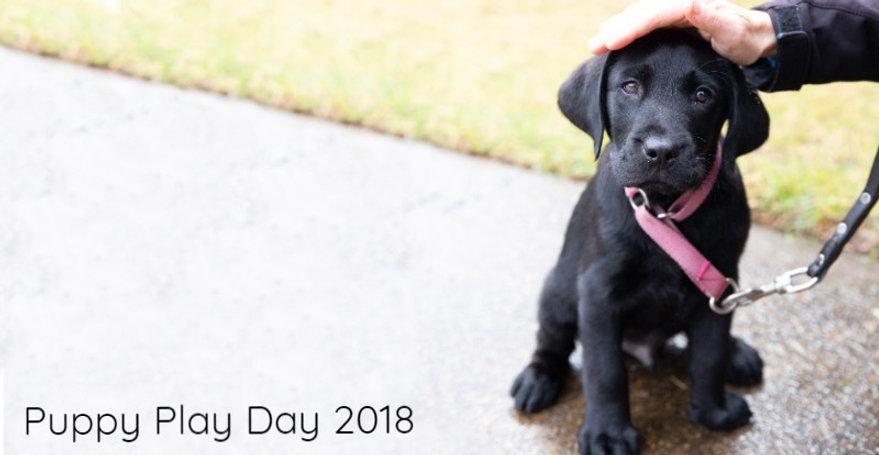 Puppy Play Day.jpg