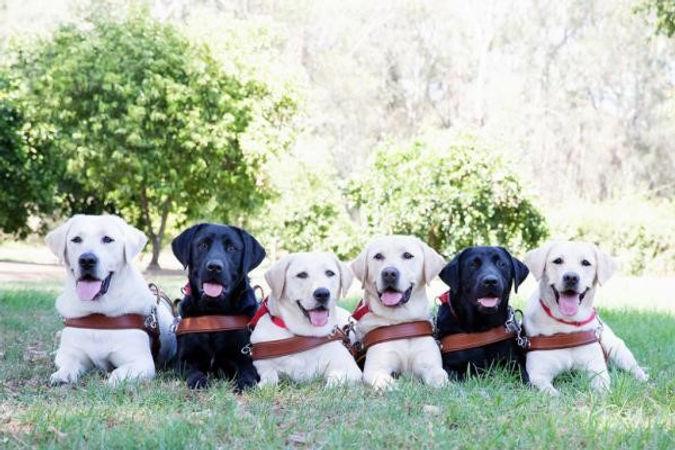 Guide Dog Graduation.jpg