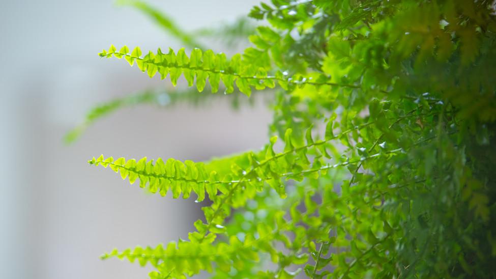 Plant wall.jpg