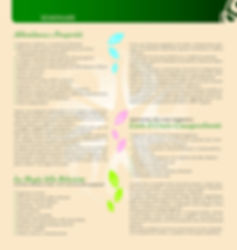 Pieghevole_Seminari_prosperità_Pagina_2.