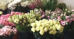 Fleuristes & Horticulture