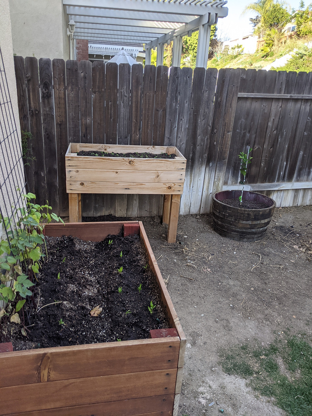 two planter boxes and a potted baby lime tree