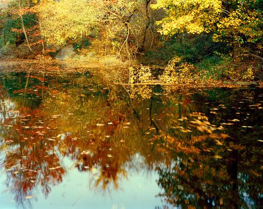 Central Park Foliage1