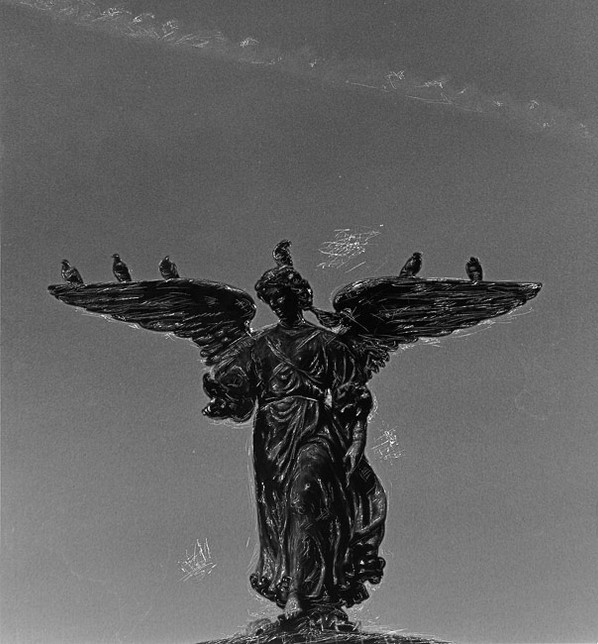 Angel And Pigeons