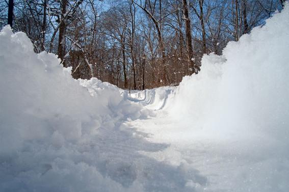 Dog Perspectives  snowy_path.jpg
