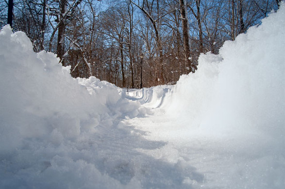 Dog Perspectives  snowy_path.jpg