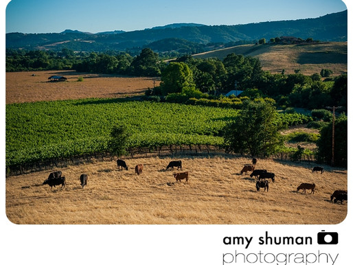 Wine country landscapes by Sacramento Photographer