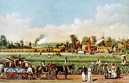 cotton-plantation-southern-colonies.jpg
