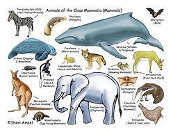 Mammalia.jpg