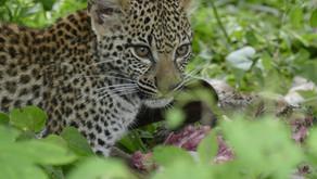 Reise til Afrika for første gang? 3 fantastiske safariområder å besøke