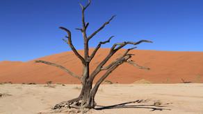 Namibia - Sossusvlei - den eldste ørkenen