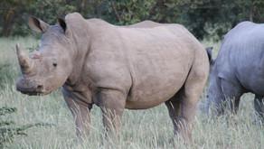 Namibia - Safari i Ongava og Etosha