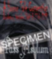 Pass Asylum Specimen.jpg
