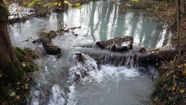 Debris Dam in Lag Wood.jpg