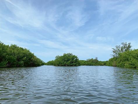 Kayaking from Turtle Beach