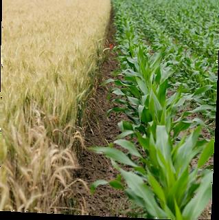 Klim Farmer Soil.png