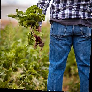 Klim Carbon Farming.png