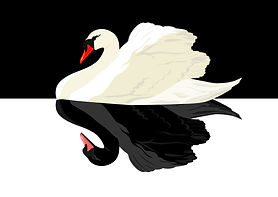 Back to normal image - Black swan shutte