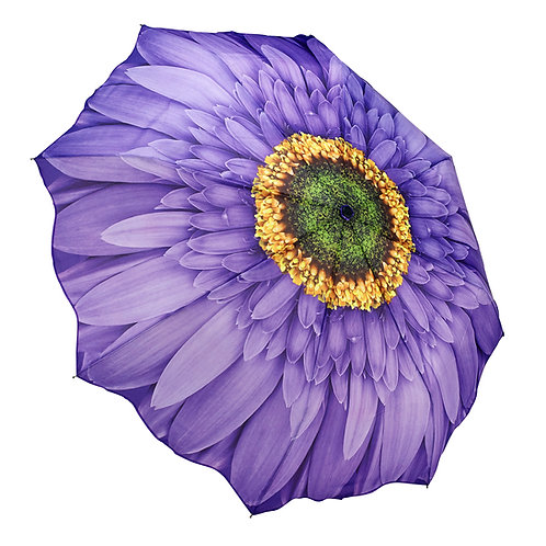 Wisteria Daisy - Folding