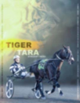 tiger tara.jpg