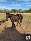 unnamed-filly-yearling1.jpg