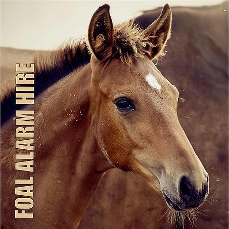 foal-alarm-hire.jpg