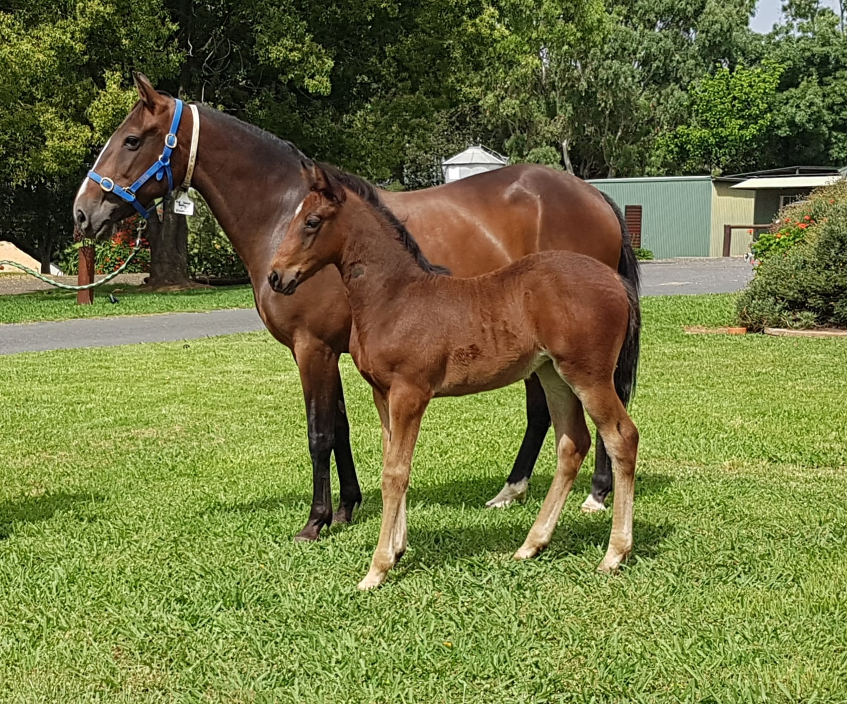 Full Speed Betty x Betting Line filly