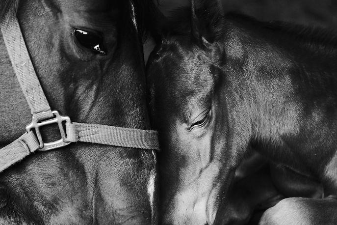 AdobeStock_317760403-mare-and-foal.jpeg