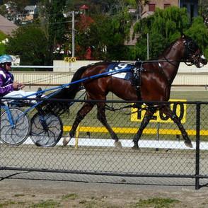 Two_Eye_See_harness_racing_horse.jpg