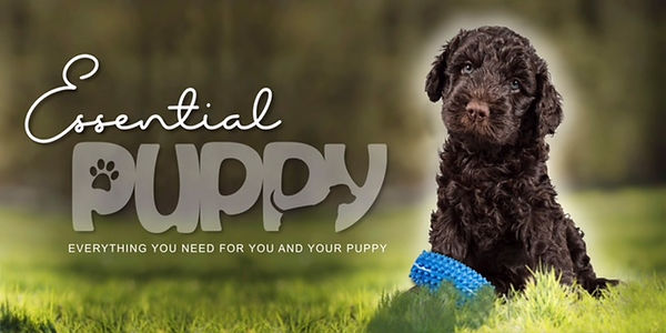 essential puppy.JPG
