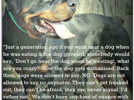 Dogs are Animals not Fur Babies or Teddy Bears!