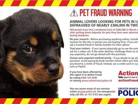 Lock Down Puppy Craziness