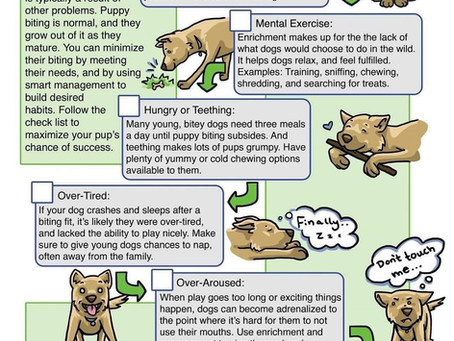 Children, Dogs & Mouthing