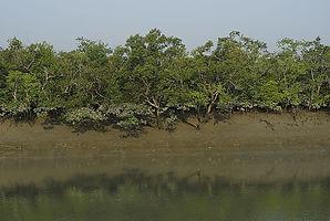 mangrove-god0045-anishandheria.jpg