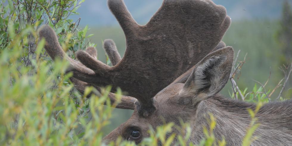 Denali/Kenai Fjords National Parks, Alaska