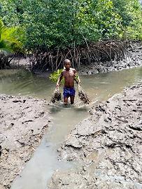 Mangrove_planting_TRCC.jpg