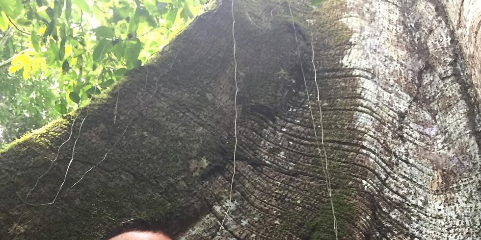 Ecuadorian Amazon: Deep Jungle