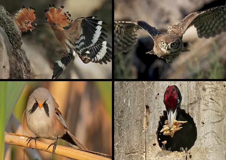 uccelli terrestri ultima.jpg