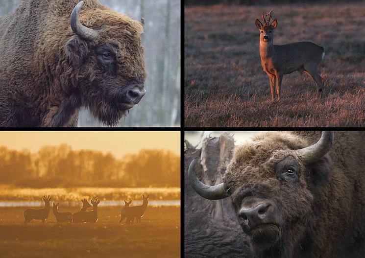 escursione bisonti.jpg