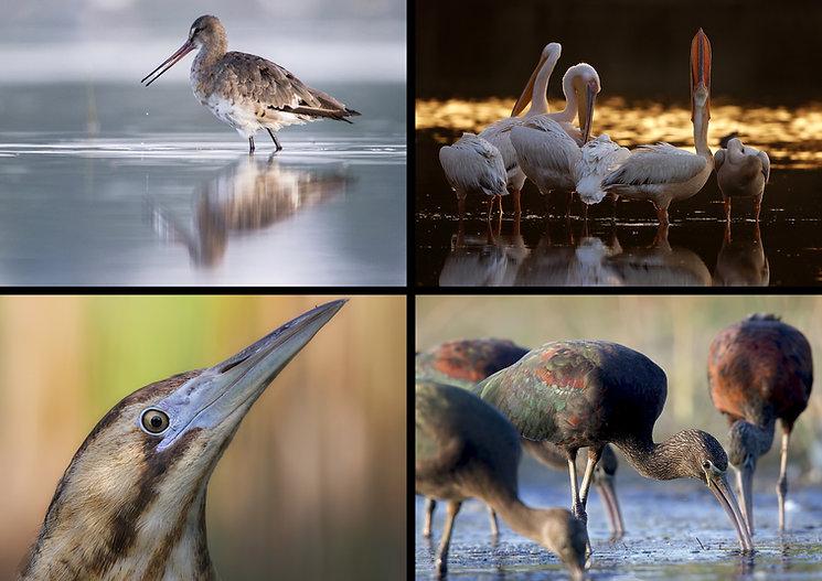 aves acuatica ultima.jpg