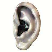 Denver Ear, 2014