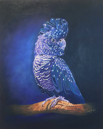 USHA SINGH - Black Cockatoo Portrait