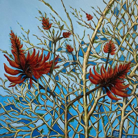 SANDY FULLERTON - Coral Tree at Waipu