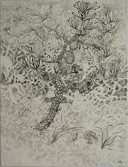 BOYD McMILLAN -The Grey Tree