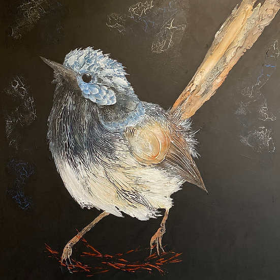 WILL HAZZARD - Superb Fairy Wren, Blue Boy